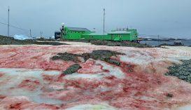 Piros hó esett az Antarktiszon