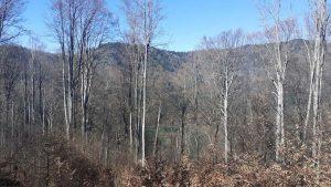 A lombtalan fák között felderengő csoda védelmet, kíméletet érdemel