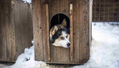 Védjük kedvencünket a hidegben is!
