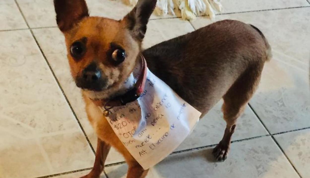 Kutyáját küldte el vásárolni, hogy ne hagyja el a karantént