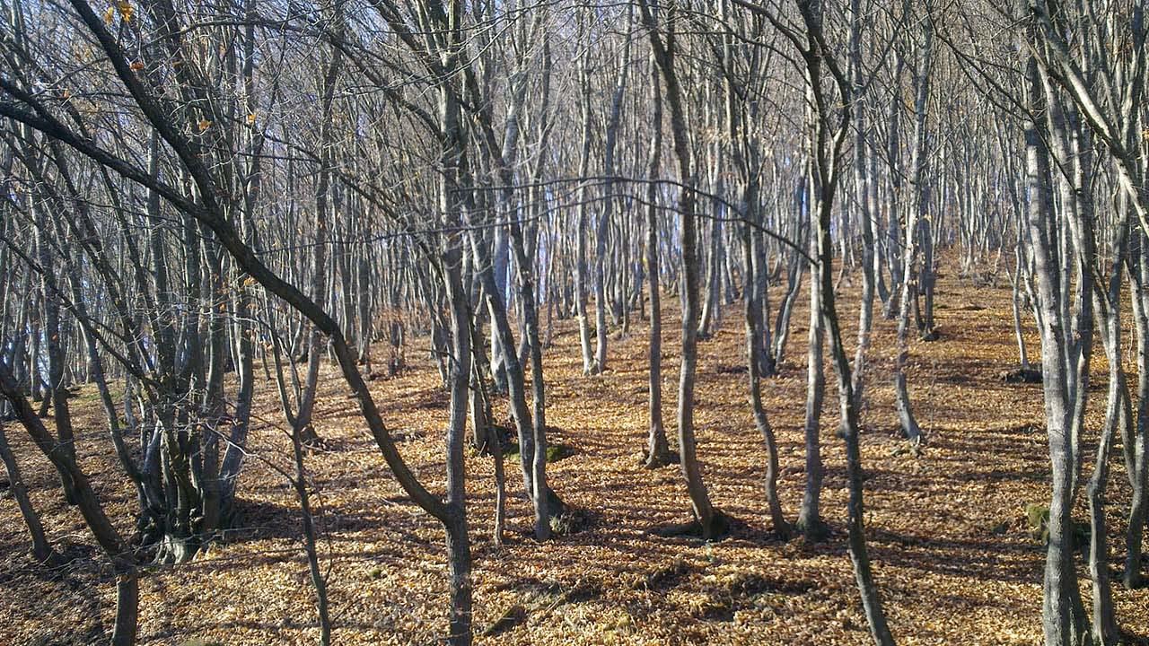 Fát és pityókát lopnak