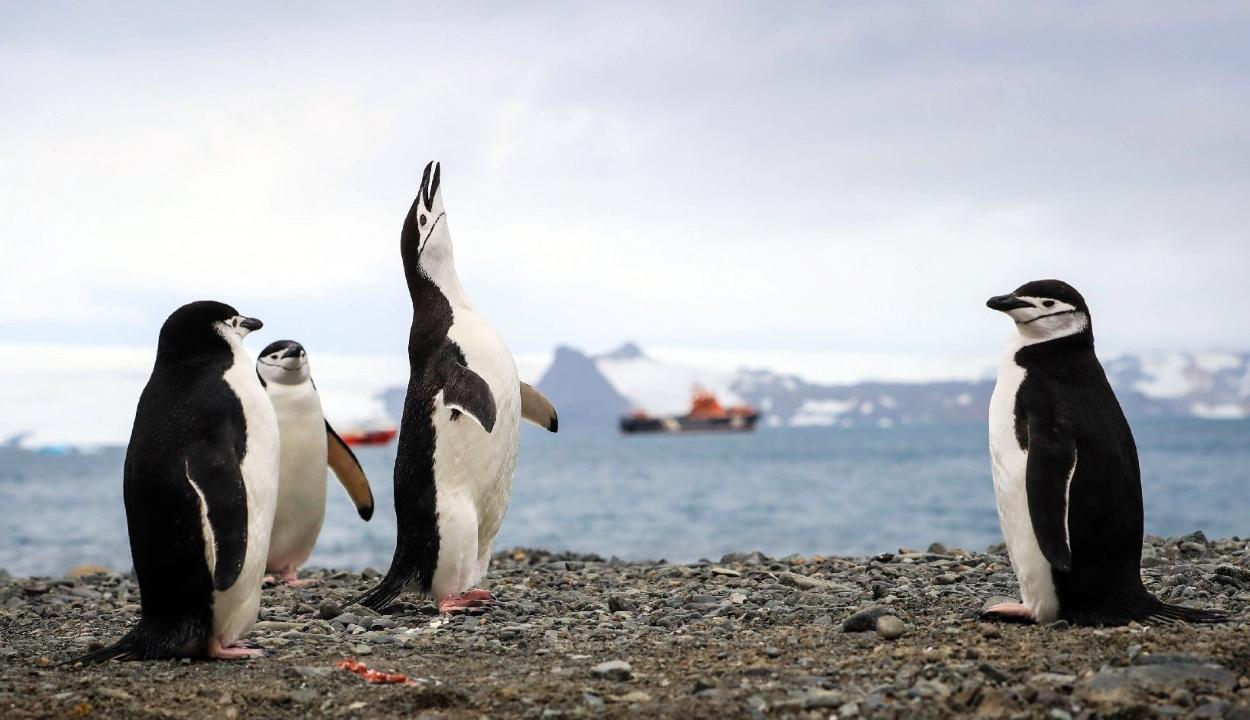 Videón mutatja be a NASA a sarkvidékek szépségét