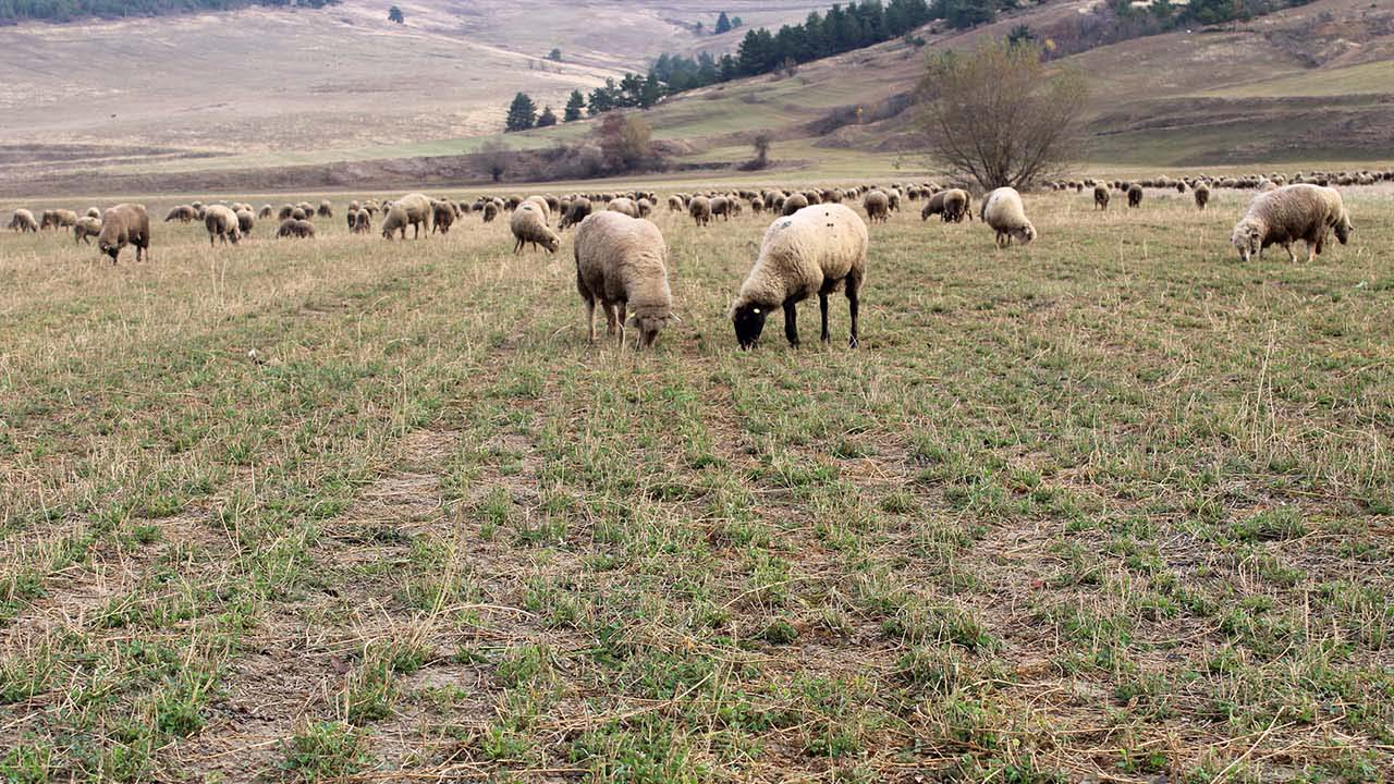 Méhészet, pásztorkodás, kenyérsütés