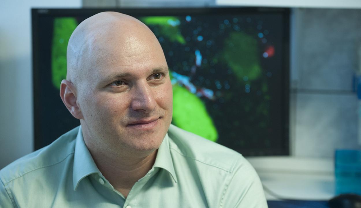 Magyar kutatók: az új koronavírus az idegrendszert is megfertőzheti