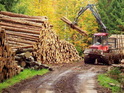 Kihirdette az államfő a rönkfa exportját tíz évre betiltó törvényt