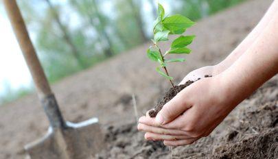 Több fa ültetése növelheti a csapadékot Európában