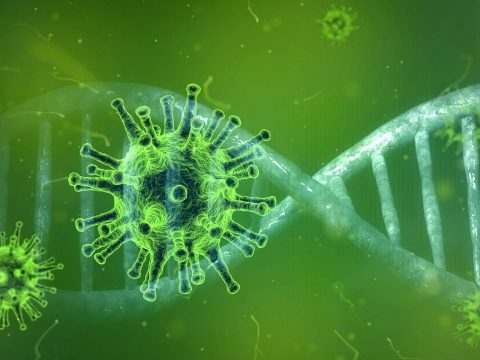 Holland kutatók rájöttek, miért veszélyeztettebbek a férfiak a koronavírus-fertőzésre