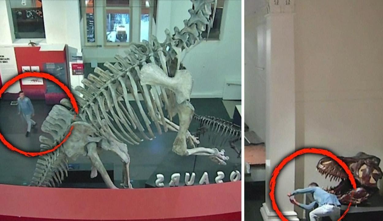 Betört a természettudományi múzeumba, majd szelfizett egy dinoszaurusszal