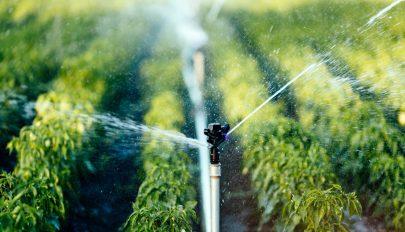 Az államfő kihirdette azt a törvényt, amely szerint illetékmentesen használható öntözésre a talajvíz