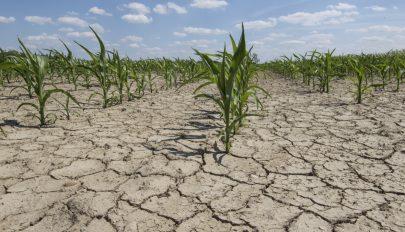 Kártérítést kapnak azok a gazdák, akik kárt szenvedtek a kedvezőtlen időjárás miatt