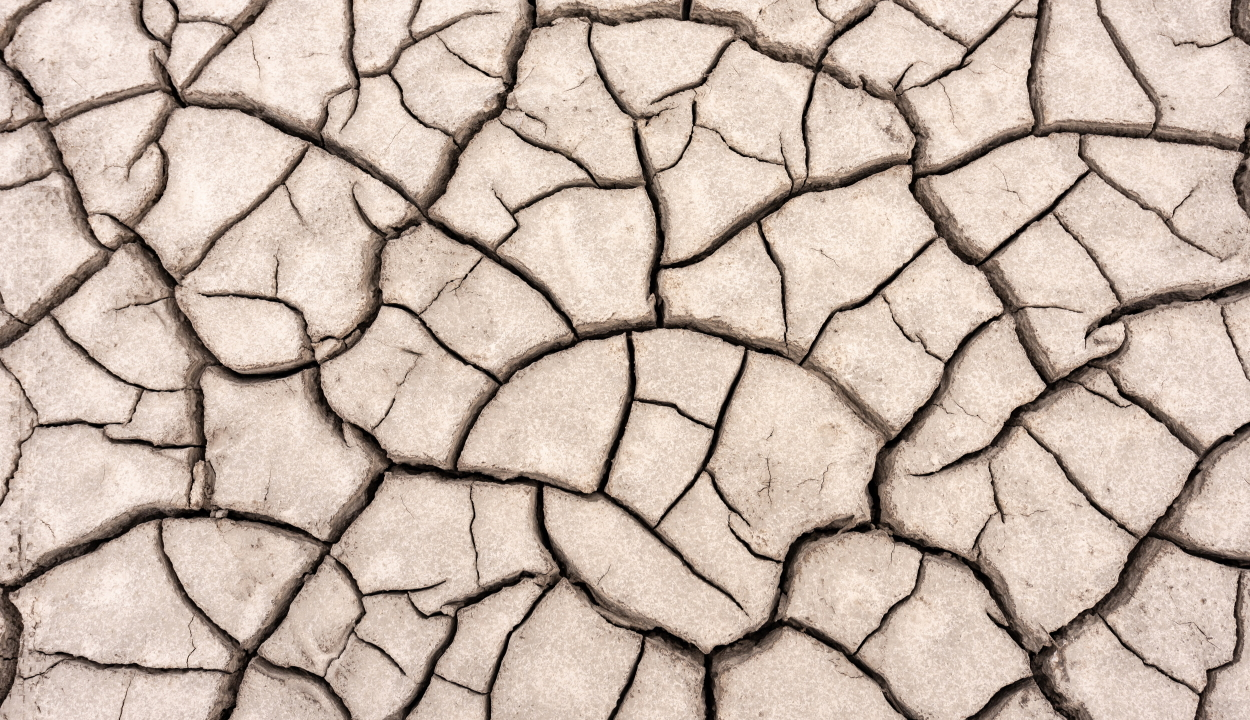1,1 millió hektár mezőgazdasági területet sújtott a szárazság