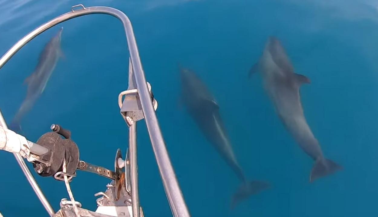 Delfineket filmeztek a Fekete-tengerben