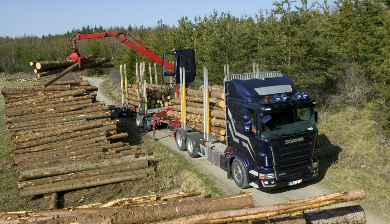 A kormány jóváhagyta a faanyag-követő rendszer elindítását