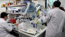 A WHO szerint nincs bizonyíték arra, hogy legyengült a vírus