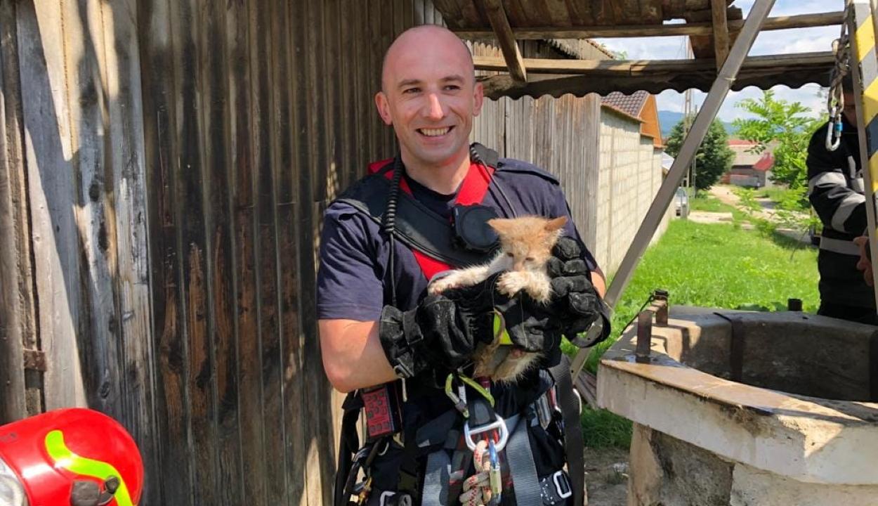 Kútba esett állatokat mentettek ki Brassó megyében