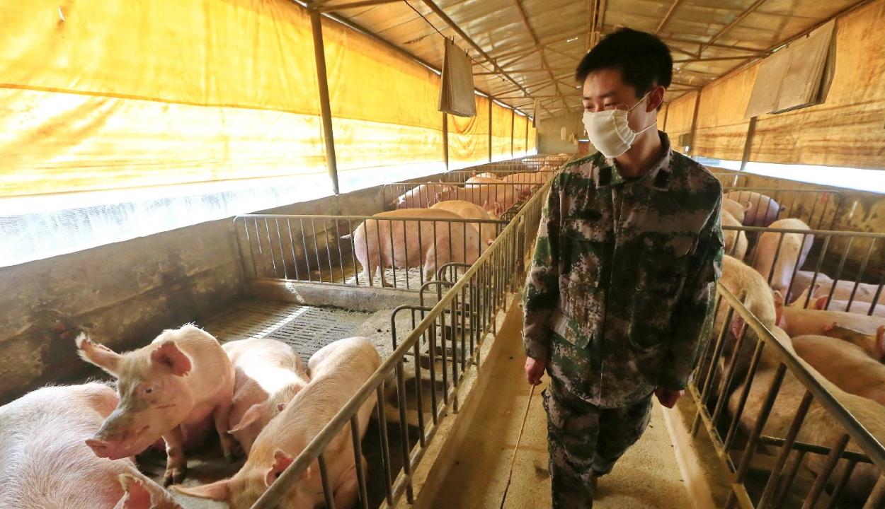 Új, emberekre is veszélyes sertésinfluenza-vírust mutattak ki Kínában