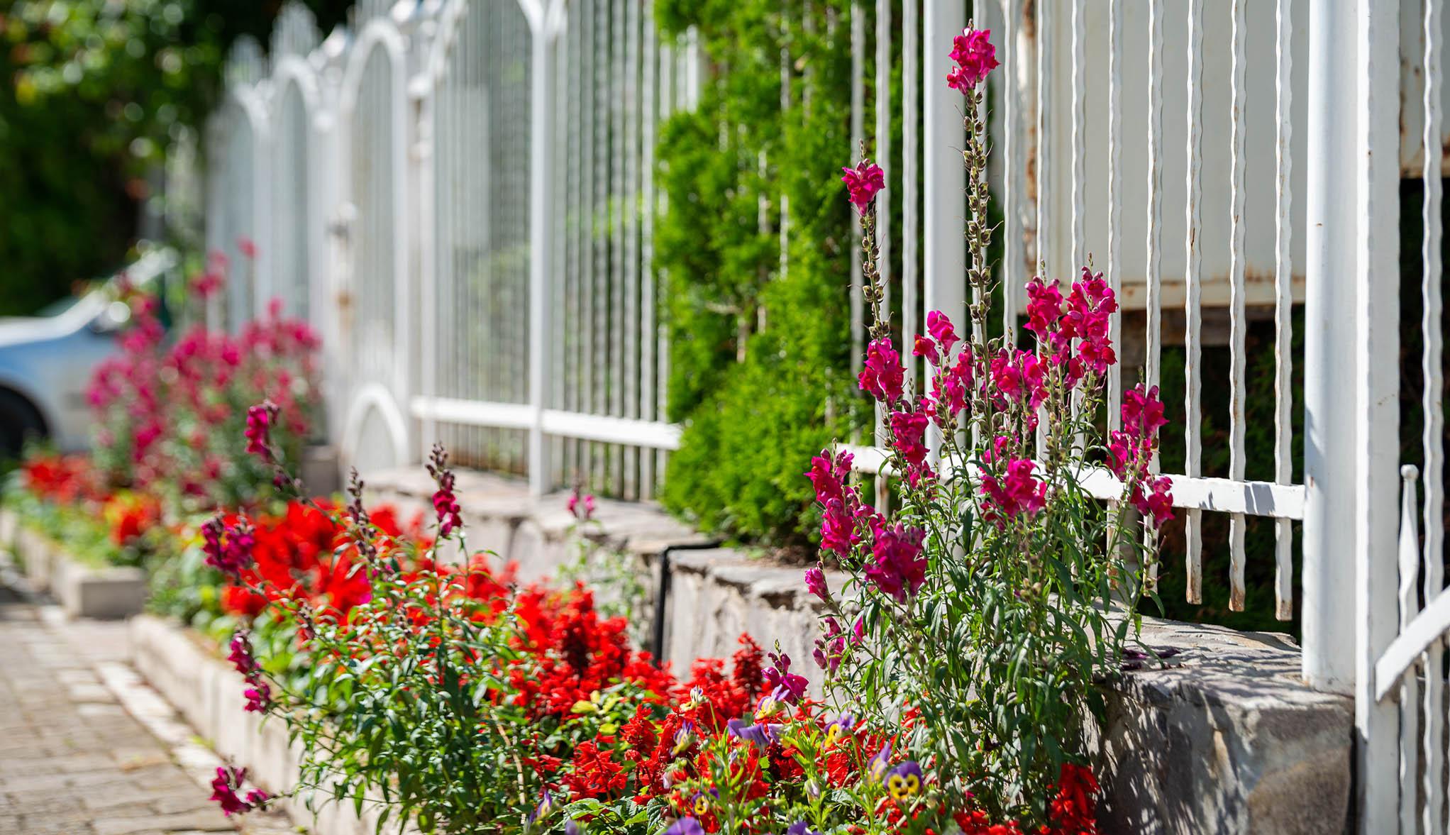 Virágos Sepsiszentgyörgy