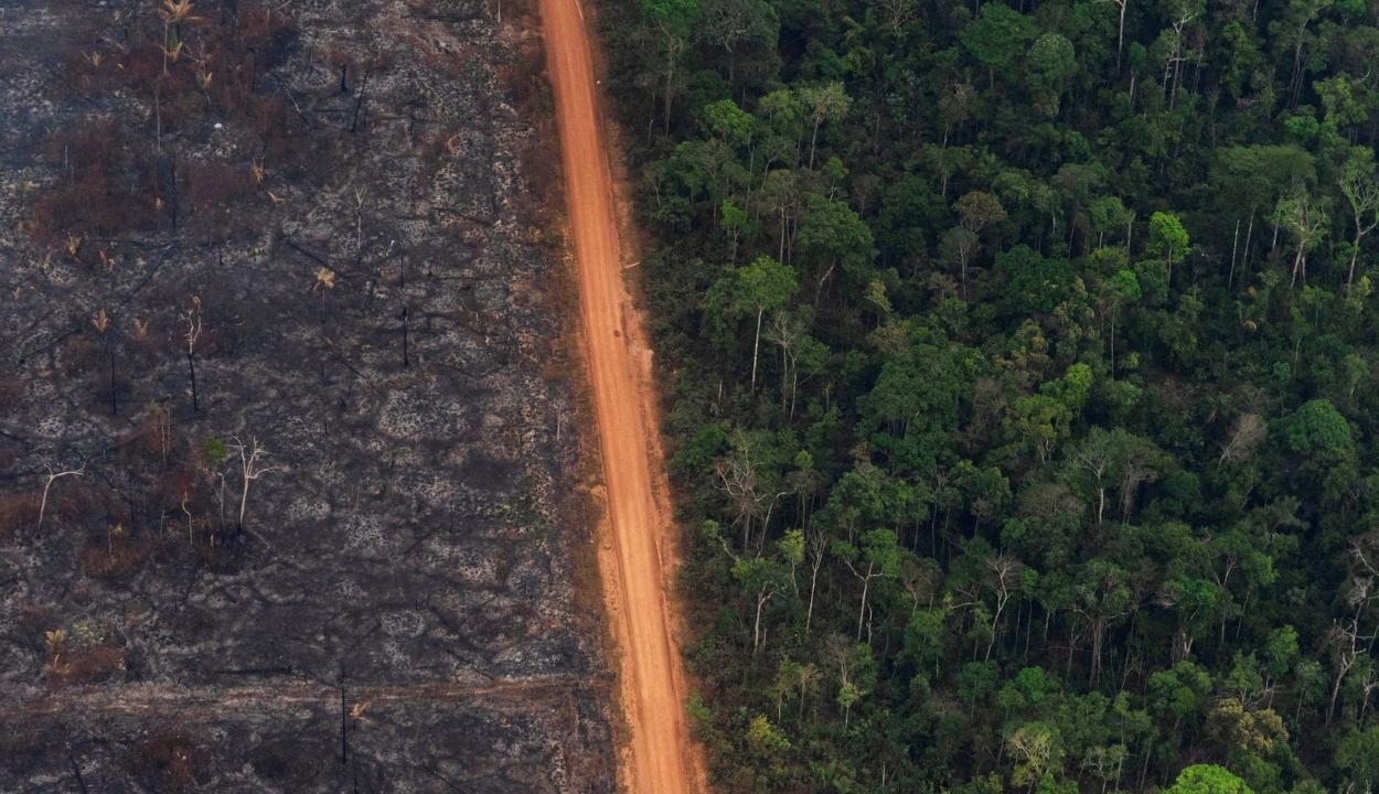 Rekordmértékben nőtt az erdőpusztítás az Amazonas-medencében