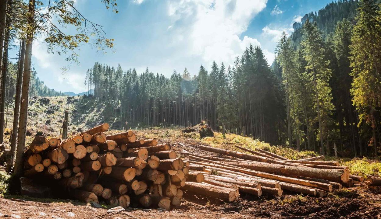 Rekordszámú környezetvédőt gyilkoltak meg tavaly a világon, köztük kettőt Romániában