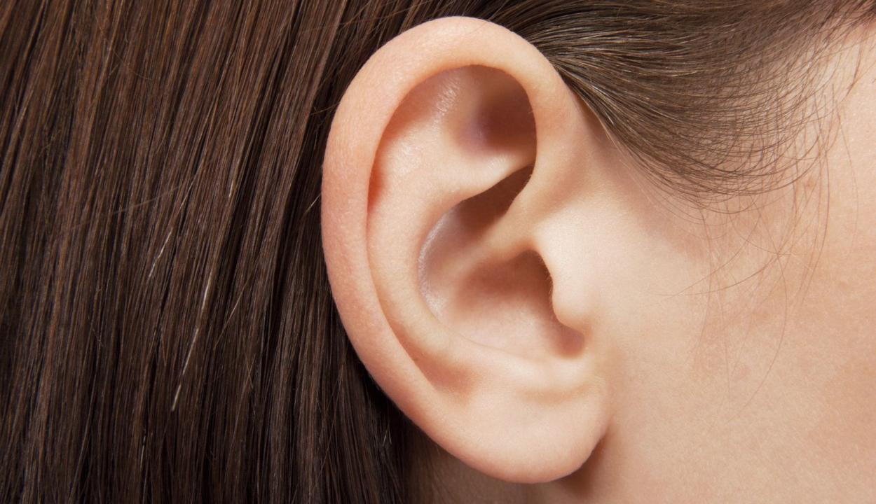 """Az ember is képes """"hegyezni a fülét"""" német kutatók szerint"""