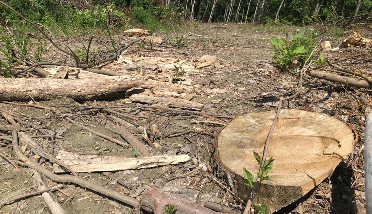 Hat erdészt öltek meg az utóbbi években a fatolvajok