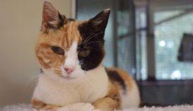 Tizenkét év után került elő egy családi nyaraláson eltűnt macska Nagy-Britanniában