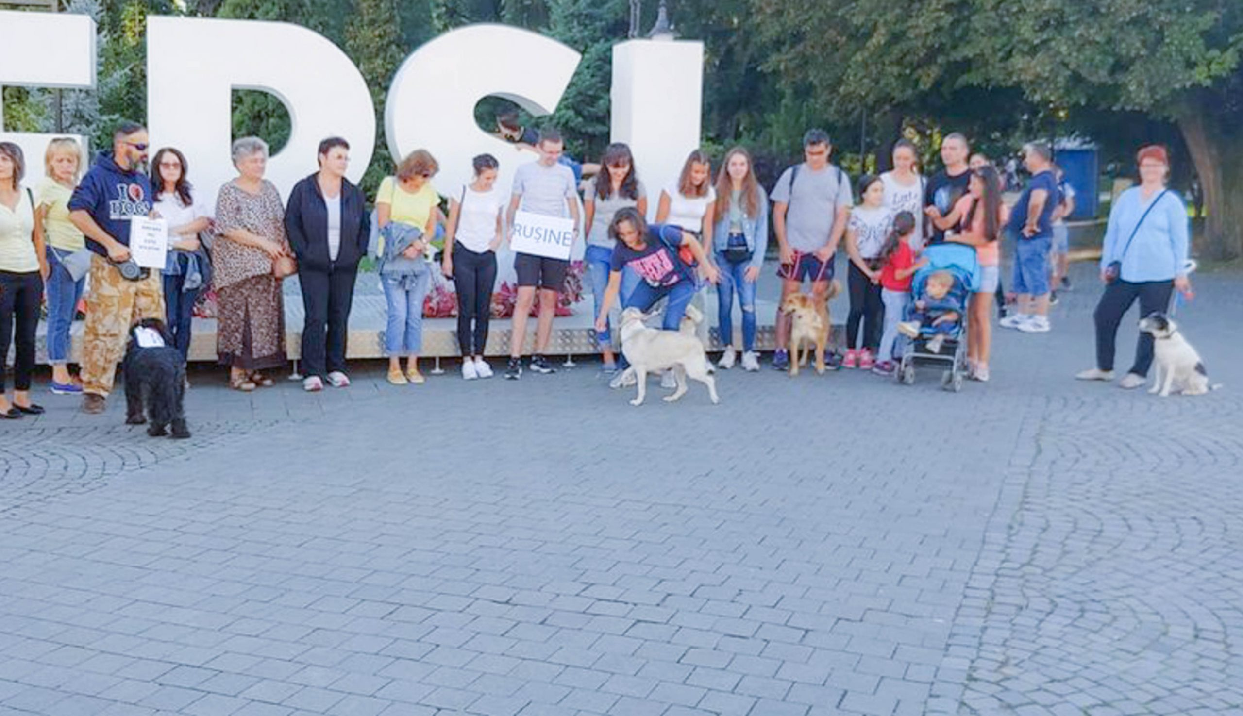 116 kutya sorsa bizonytalan