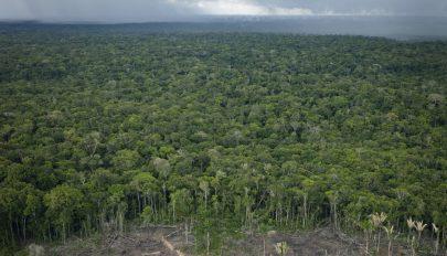 Több szén-dioxidot bocsátanak ki az Amazonas erdei, mint amennyit elnyelnek