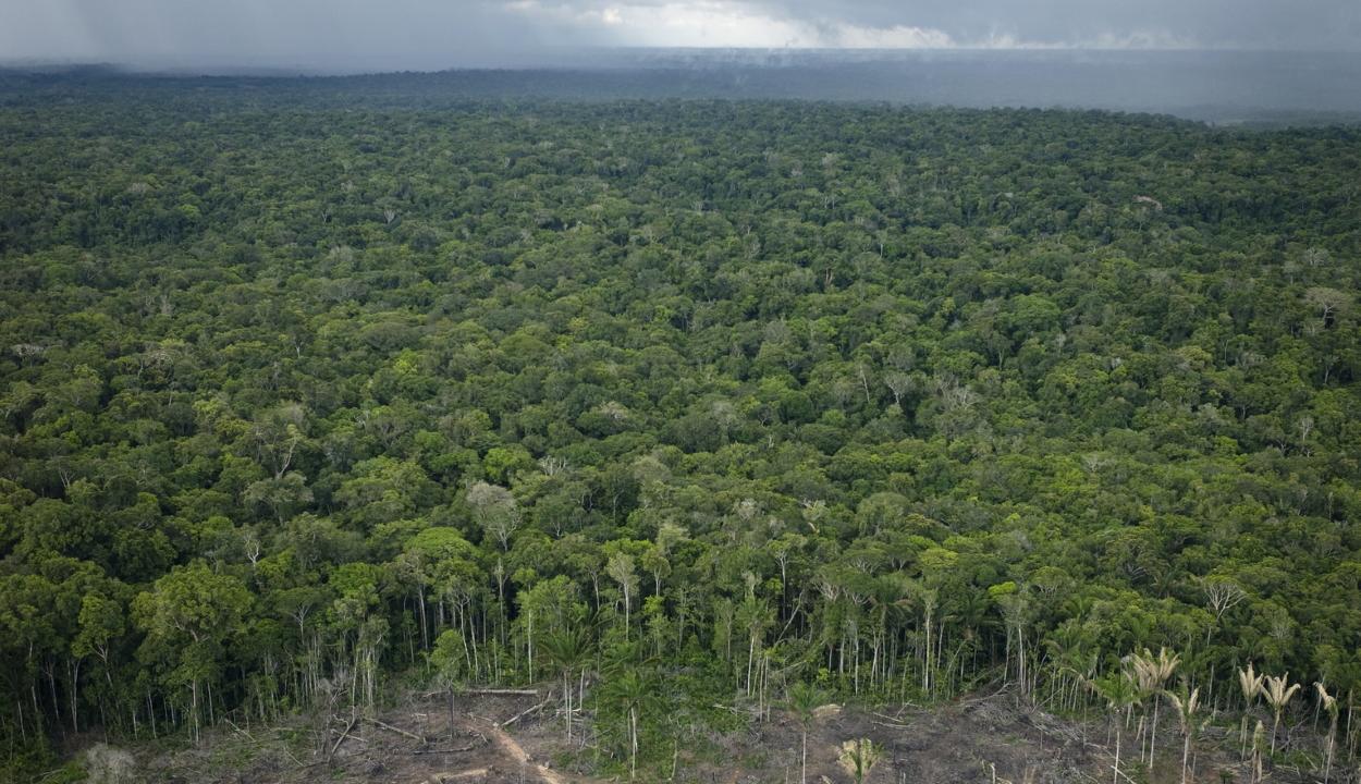 Együttes erővel mentenék meg az Amazonas esőerdőit Európa országai