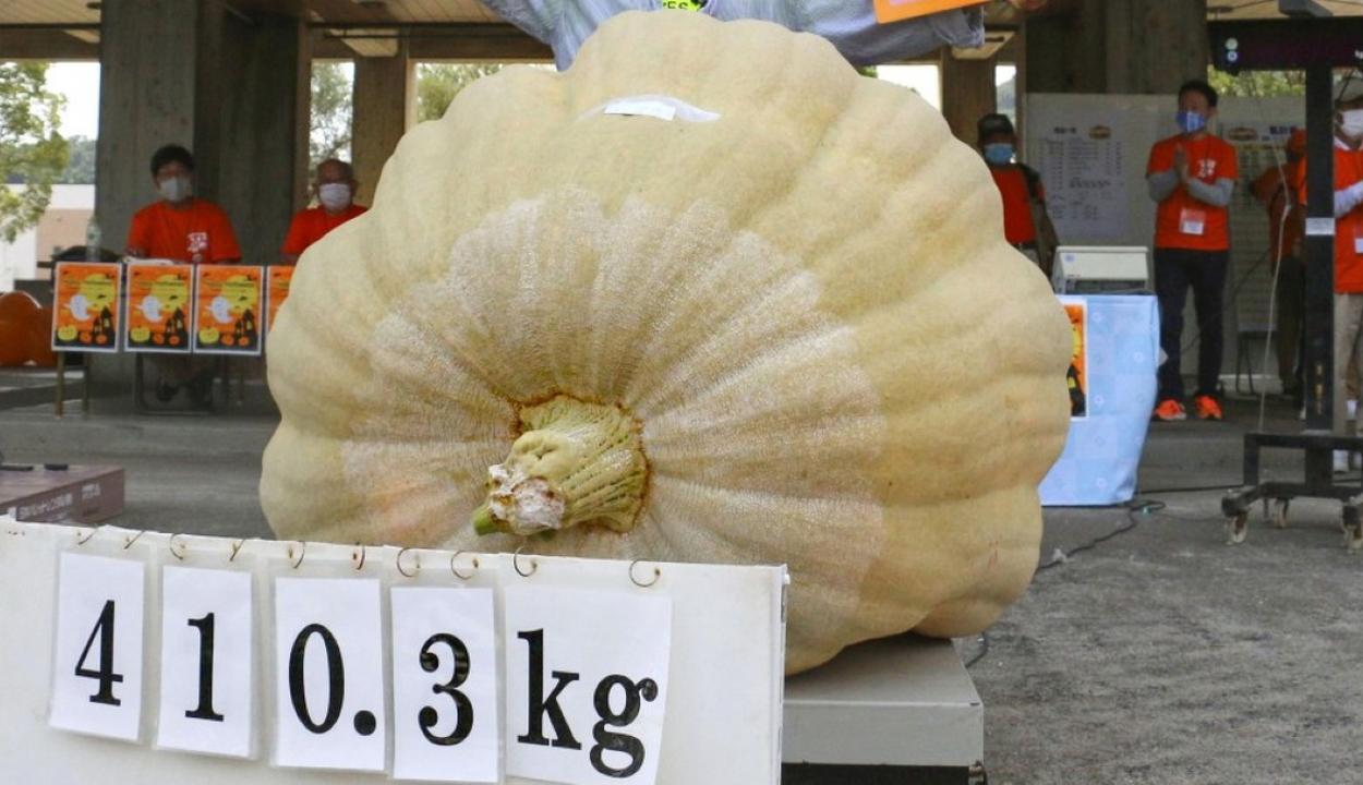 Több mint négy mázsás Japán legnagyobb töke