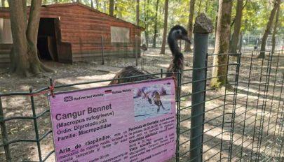 Tragédia a temesvári állatkertben