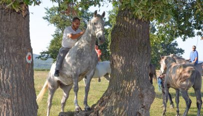 Intenzív lovasíjász-képzés