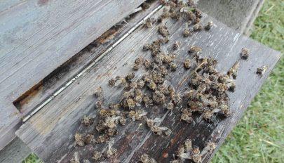 Számos méhcsalád pusztult el