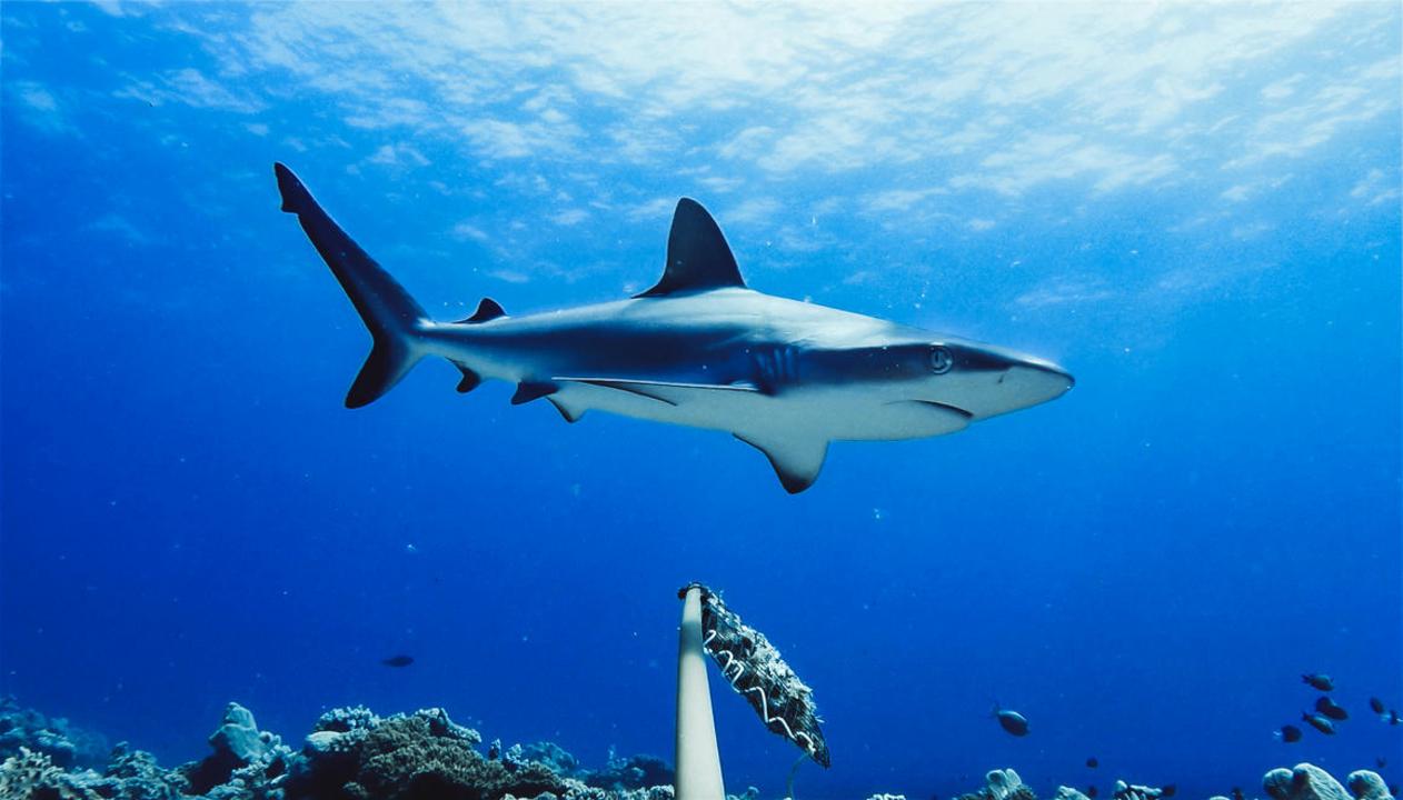 Ausztráliában több mint nyolcvan éve nem volt annyi cápatámadás, mint 2020-ban