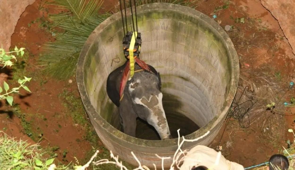 14 órás mentőakcióval emeltek ki egy elefántot egy kútból Indiában