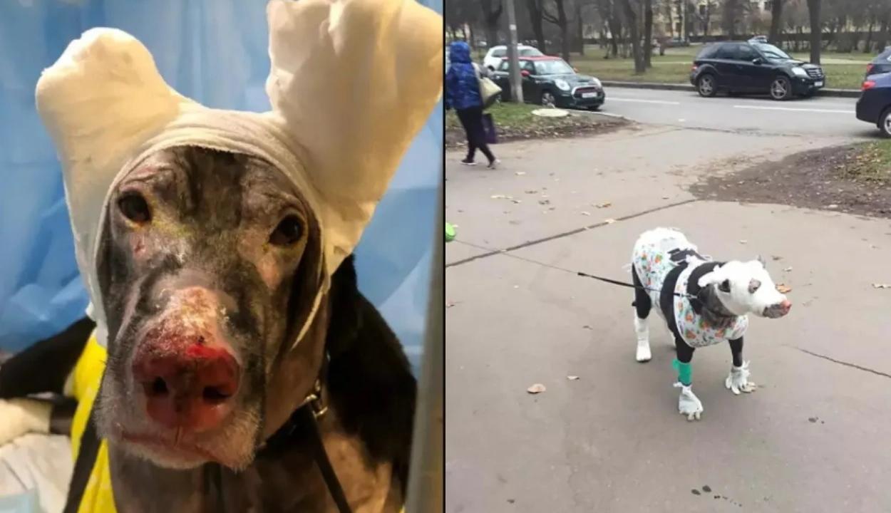 Hős kutya mentette a betegeket az orosz kórháztűzből