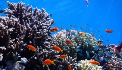 A világ korallzátonyainak 14 százaléka eltűnt egy évtized alatt