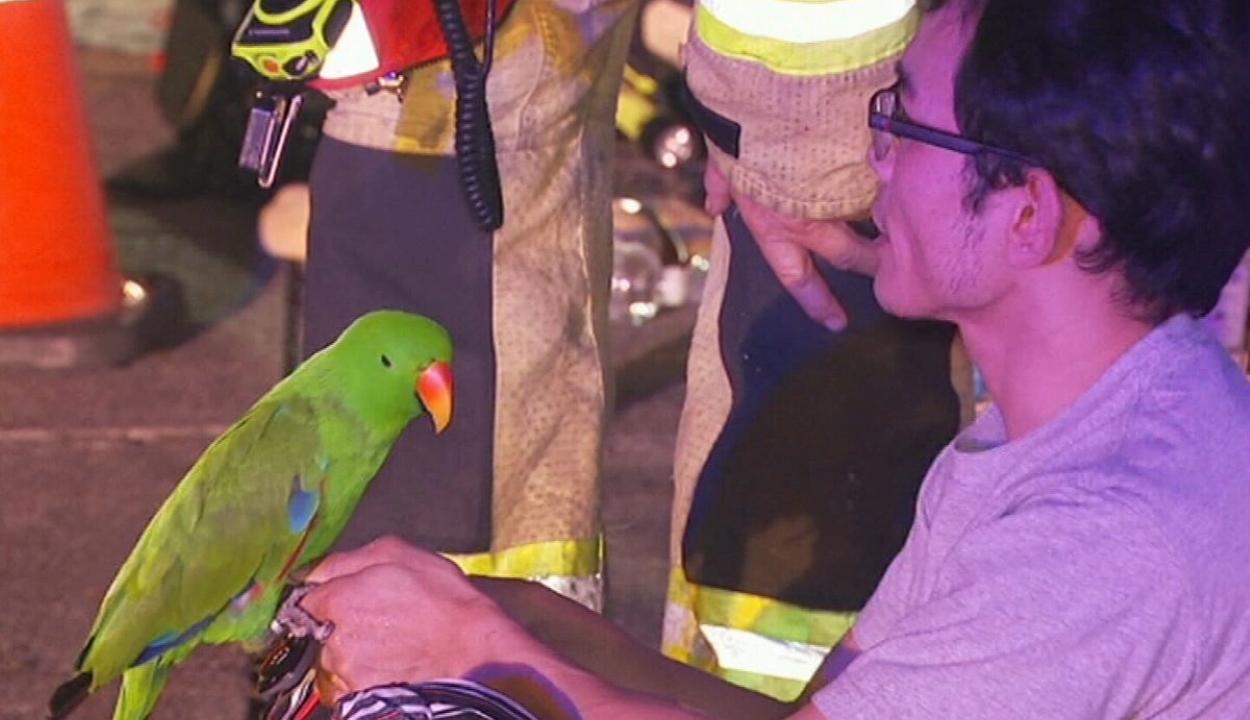 Tűzből mentette ki gazdáját a beszélő papagáj