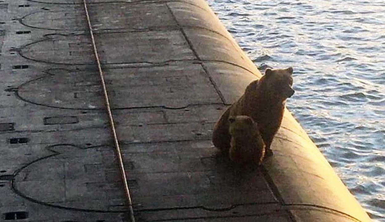 Agyonlőttek két medvét, mert felmásztak egy orosz atom-tengeralattjáróra