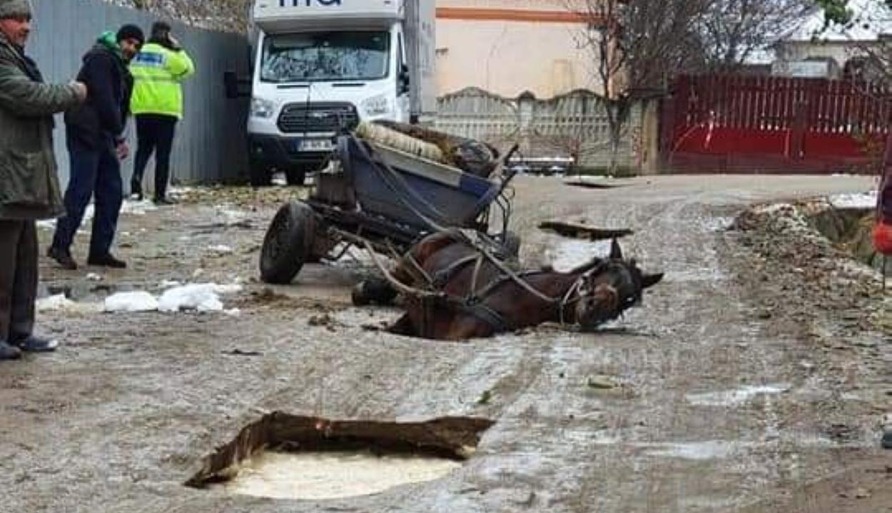 Az úton keletkezett kráterbe zuhant egy ló Teleormanban