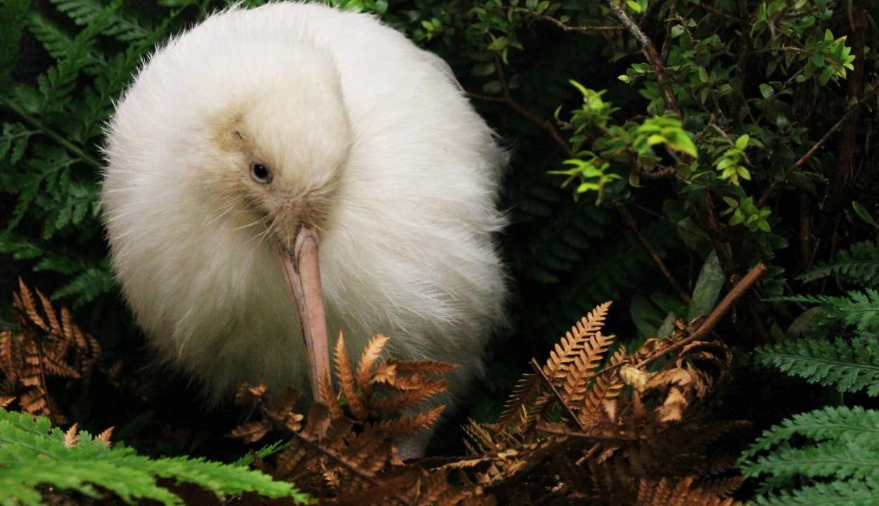 Elpusztult a világ egyik legritkább madara