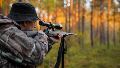 A vadászegyesületek a medvepopuláció tudományos felmérését követelik