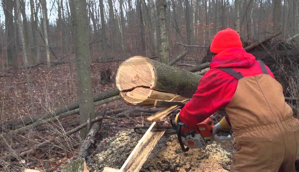 Tragédia az erdőben