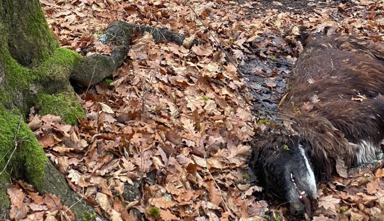 Morbid kutyaakasztás