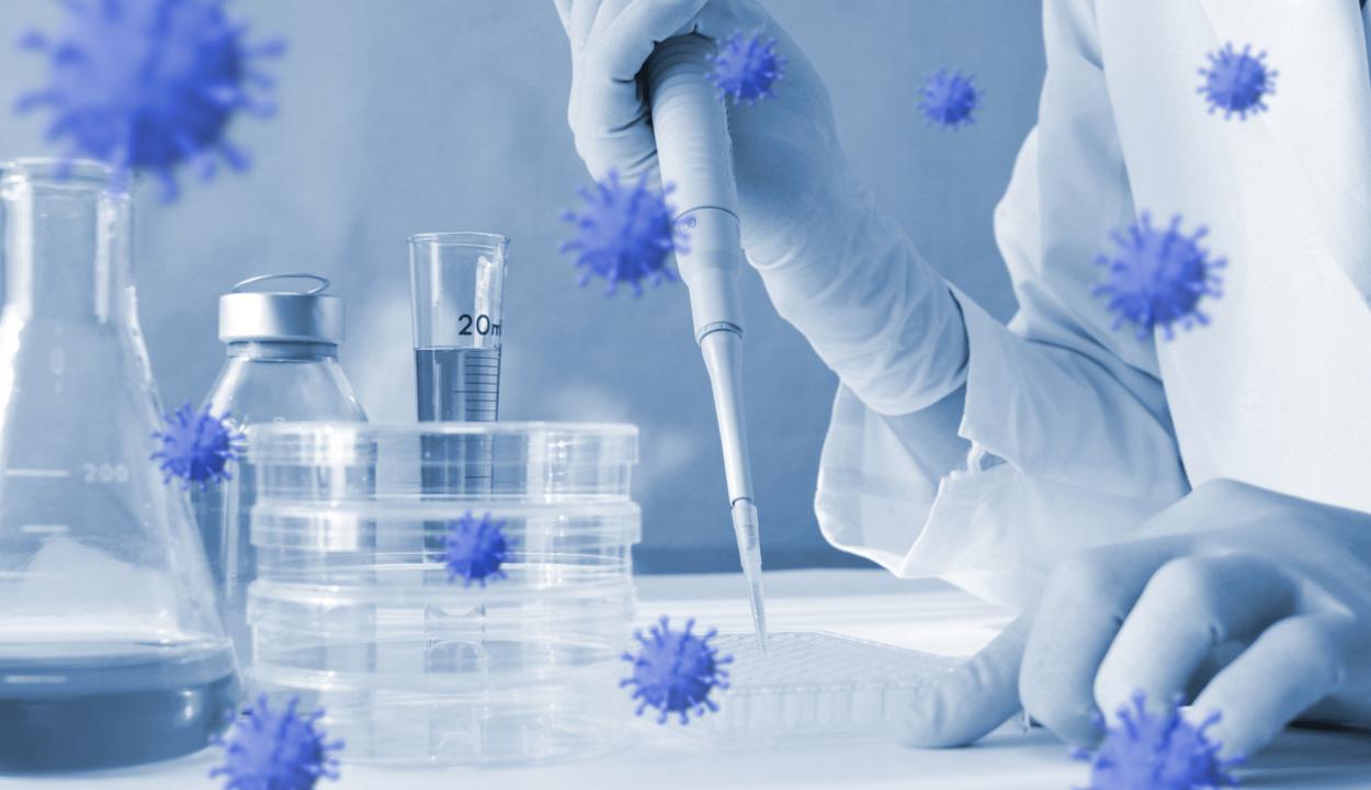Az antitestek a fertőzést követően legalább hat hónapig kimutathatók a többségnél