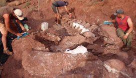A valaha élt legnagyobb élőlény maradványaira bukkantak