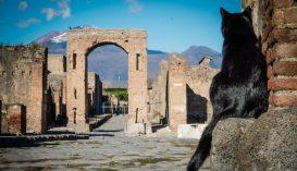 Négy éve eltűnt macska talált haza