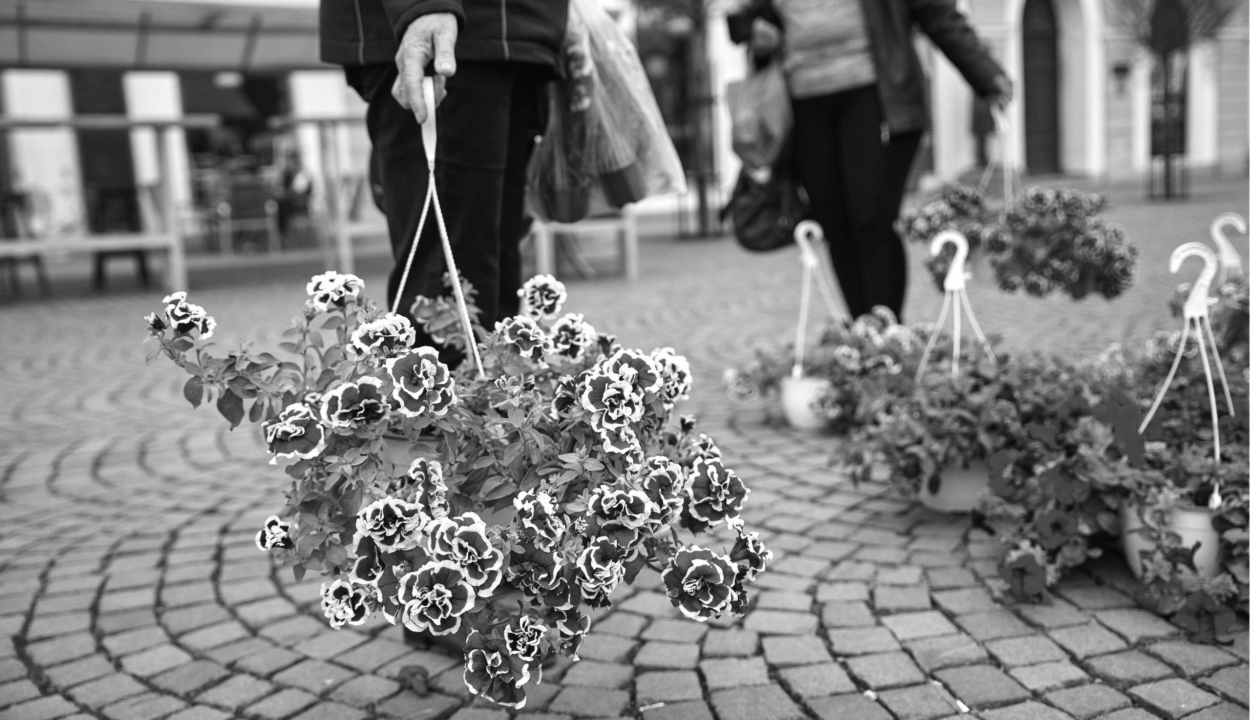 Tíz virágtermesztőt várnak