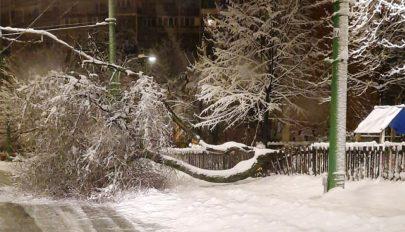 Fák dőltek ki Brassóban a nagy mennyiségű hó miatt