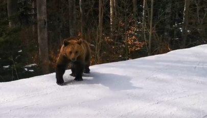 """Medve """"szórakoztatta"""" a sízőket egy predeáli sípályán"""